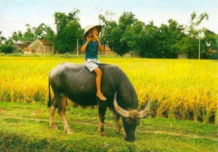 Venir à Quang Thanh pour admirer la campagne de Hue